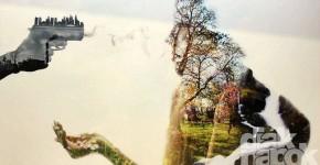 Fotó, film, új vizuális kísérleti műfajok kategória
